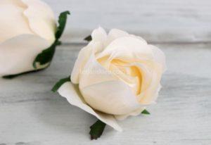Róża pąk