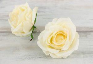 Róża pąk rozwinięty Masełkowa